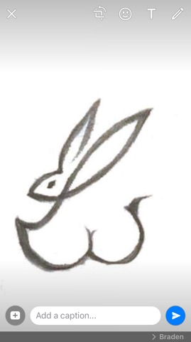 Bad bunny swimsuit logo graphic design Vancouver created by Feifei Digital Ltd Agency | Monika Szucs